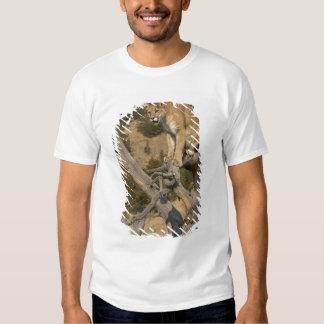 Mountain Lion, aka puma, cougar; Puma concolor, 2 T Shirt