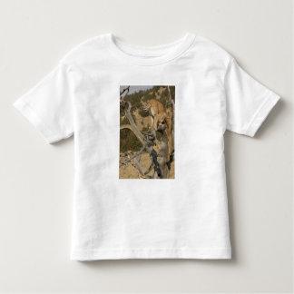 Mountain Lion, aka puma, cougar; Puma concolor, 2 Tee Shirt