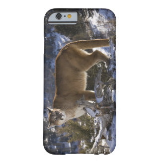 Mountain Lion, aka puma, cougar; Puma concolor, Barely There iPhone 6 Case