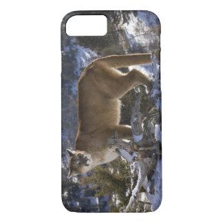 Mountain Lion, aka puma, cougar; Puma concolor, iPhone 7 Case