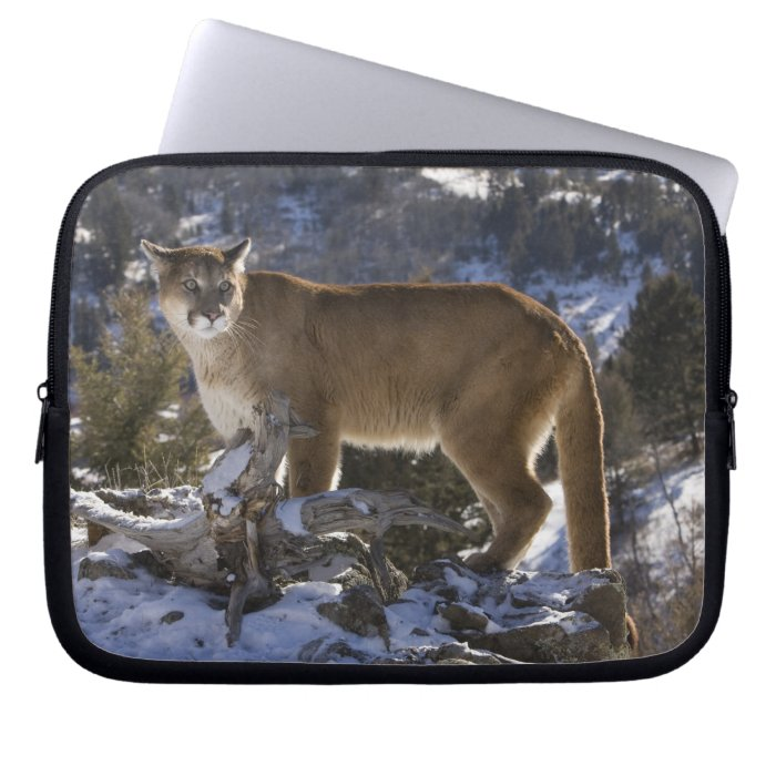 Mountain Lion, aka puma, cougar; Puma concolor, Laptop Sleeve