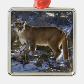 Mountain Lion, aka puma, cougar; Puma concolor, Metal Ornament