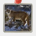 Mountain Lion, aka puma, cougar; Puma concolor, Square Metal Christmas Ornament