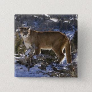 Mountain Lion, aka puma, cougar; Puma concolor, Pinback Button