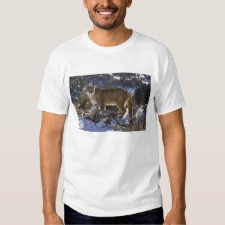 Mountain Lion, aka puma, cougar; Puma concolor, Shirt