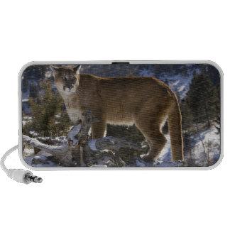 Mountain Lion, aka puma, cougar; Puma concolor, Mini Speaker