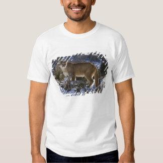 Mountain Lion, aka puma, cougar; Puma concolor, Tee Shirt