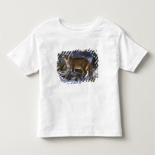 Mountain Lion, aka puma, cougar; Puma concolor, Toddler T-shirt