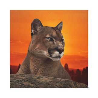 Mountain lion at sunset canvas print