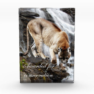 Mountain lion at the waterfall acrylic award