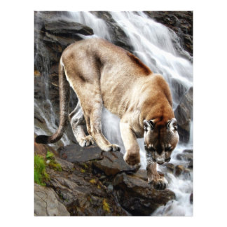 Mountain lion at the waterfall letterhead