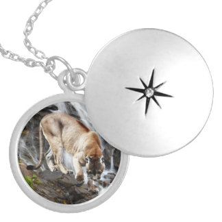 Mountain lion at the waterfall pendants