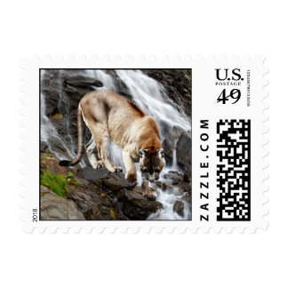 Mountain lion at the waterfall stamp