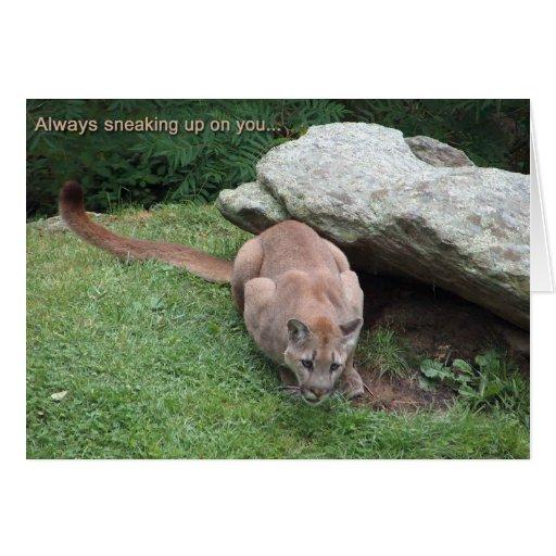 mountain lion birthday card