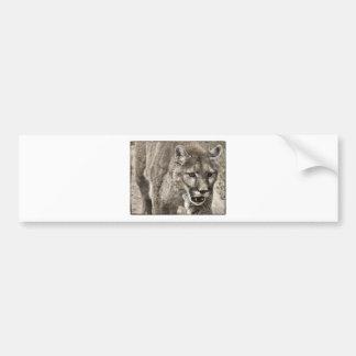 mountain lion close up bumper stickers