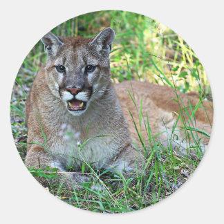 Mountain Lion Complaining Classic Round Sticker