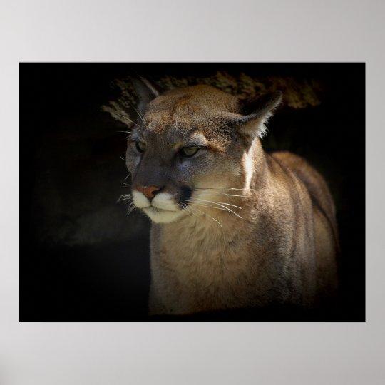 MOUNTAIN LION Cougar Big Cat Wildlife Poster