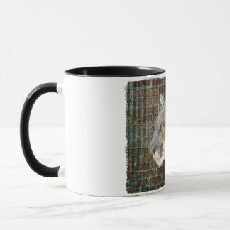 Mountain Lion / Cougar Mug