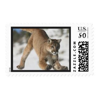 Mountain Lion Cougar Postage Stamp
