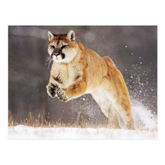 Mountain Lion (Cougar) Tarjetas Postales