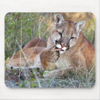 Mountain Lion - Hmmm Mouse Pad