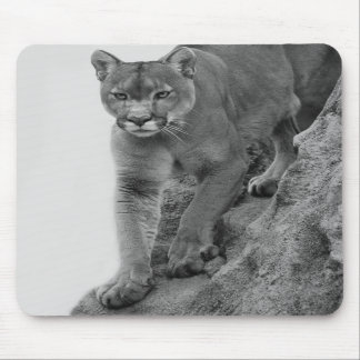Mountain Lion in Black and white Mouse Pads