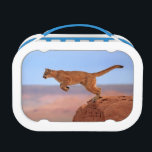 "Mountain Lion Lunch Box<br><div class=""desc"">Mountain lion,  (Felis concolor),  Monument</div>"