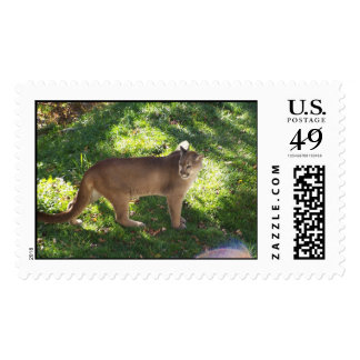 mountain lion postage stamp