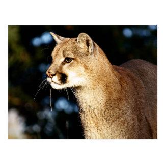 Mountain Lion Profile Postcard
