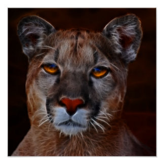 Mountain lion puma poster