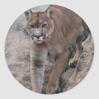 Mountain lion rock climbing classic round sticker