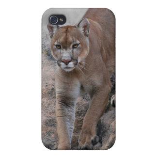 Mountain lion rock climbing iPhone 4 case