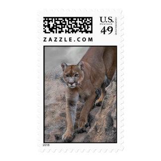 Mountain lion rock climbing stamp