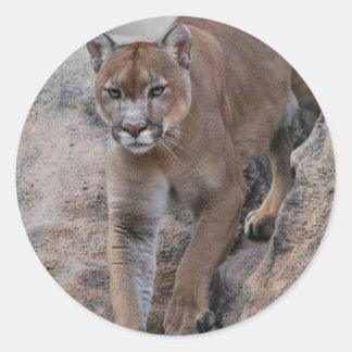 Mountain lion rock climbing round sticker
