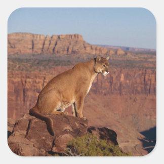 Mountain Lion Square Sticker