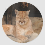Mountain Lion Stickers