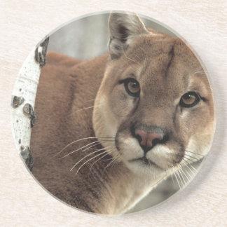 Mountain Lion Striking a Pose Drink Coaster