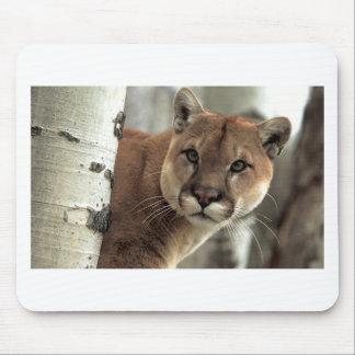 Mountain Lion Striking a Pose Mouse Pad