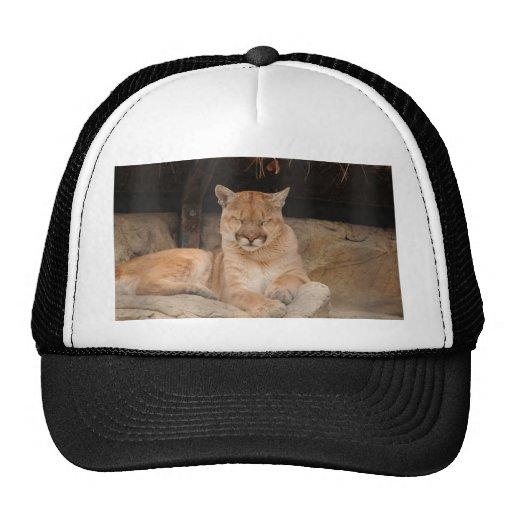 Mountain Lion Trucker Hat