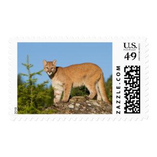 Mountain Lion Wildlife Postage