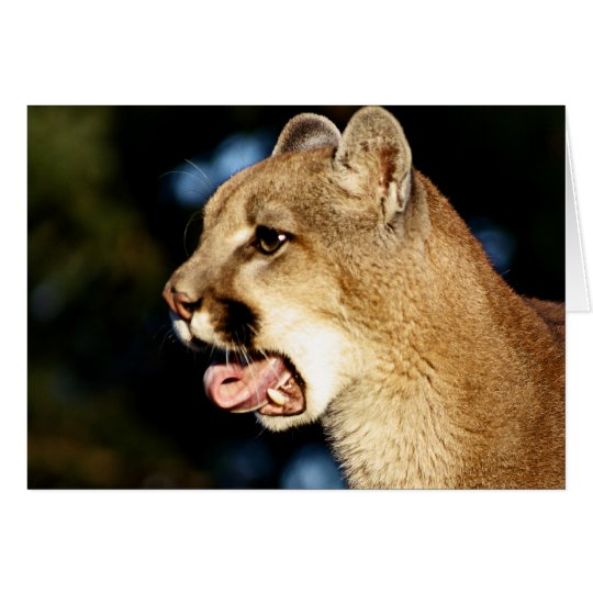 Mountain Lion Yawn Card