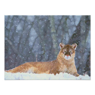 MOUNTAIN LIONS POSTER