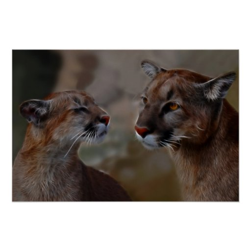 Mountain lions reverence poster