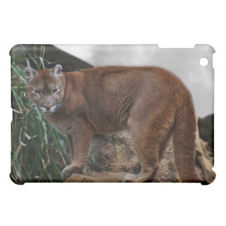 Mountain lions stance iPad mini cases