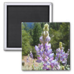 Mountain Lupins 2 Inch Square Magnet
