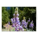 Mountain Lupins at Yosemite Card