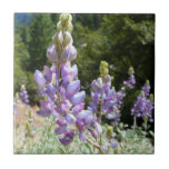 Mountain Lupins at Yosemite Tile