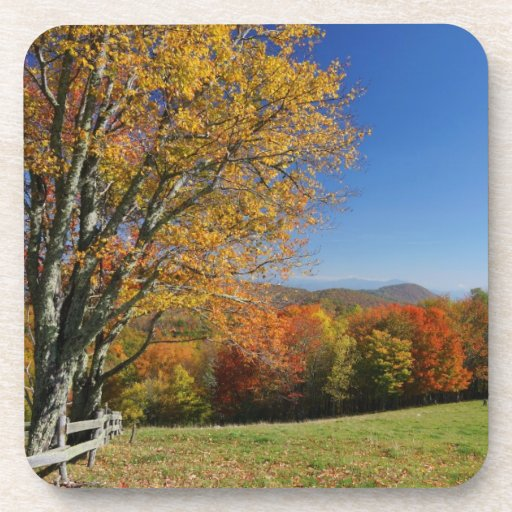 Mountain Meadow Coasters