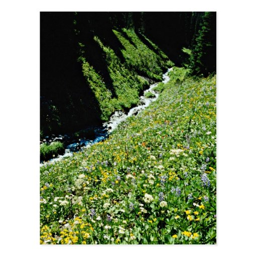 Mountain meadow with creek, British Columbia, Cana Postcard