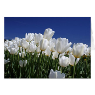 Mountain of Tulips on a perfect blue sky Card